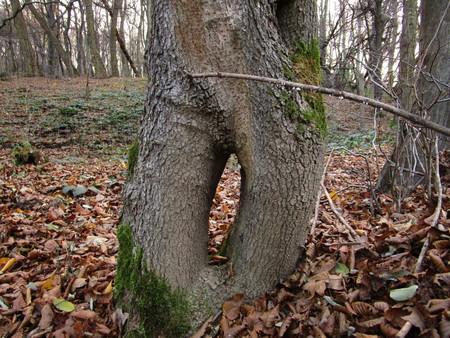 hole: tree hole
