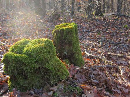 mossy: mossy log