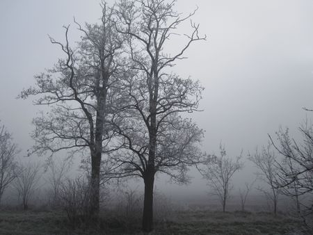 hoary: hoary trees Stock Photo