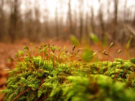 spore: moss spore Stock Photo