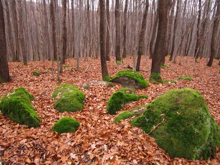 mossy: mossy stones