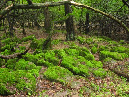 beautyful: beautyful green Stock Photo