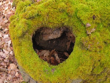 mossy: mossy heart