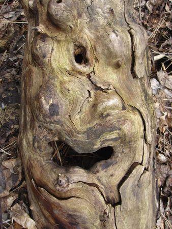 gnome: wood gnome