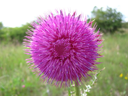beautyful: beautyful purple