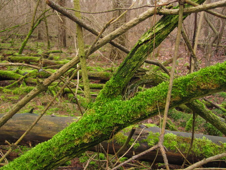 mossy: mossy place