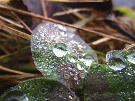 dewdrop: dewdrop Stock Photo