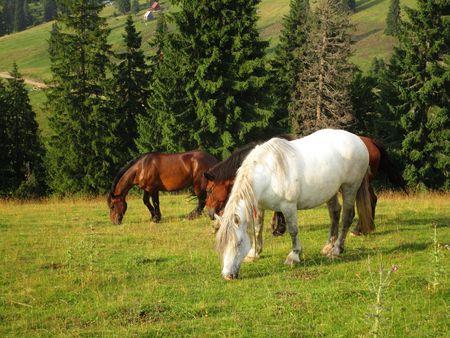 bronco: Horses