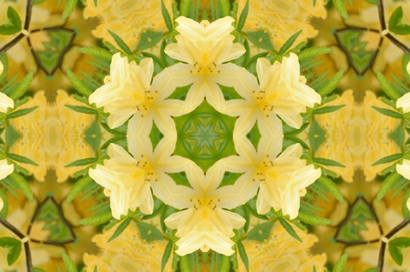 mandala: Yellow Flower Mandala