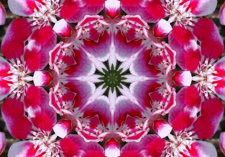mandala:   Red Flower Mandala