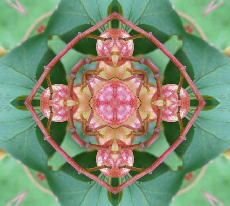 mandala:  Green and Pink Mandala Stock Photo