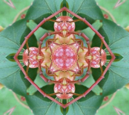kaleidoscopic:  Green and Pink Mandala Stock Photo