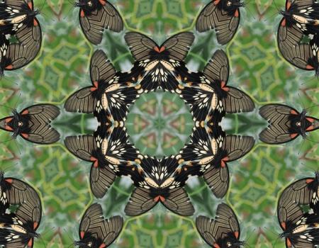 Butterfly Mandala photo
