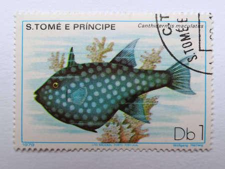 triggerfish: DEMOCRATIC REPUBLIC OF SAO TOME AND PRINCIPE - CIRCA 1979: A stamp printed in Democratic republic of Sao Tome and Pricipe shows an Ocean Triggerfish (Canthidermis Maculata)