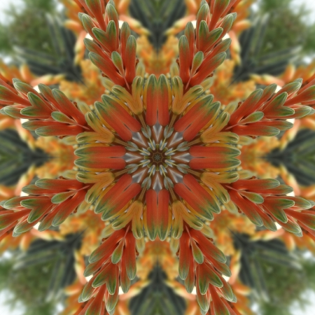 Bright Floral Mandala                                Stock Photo - 13606373