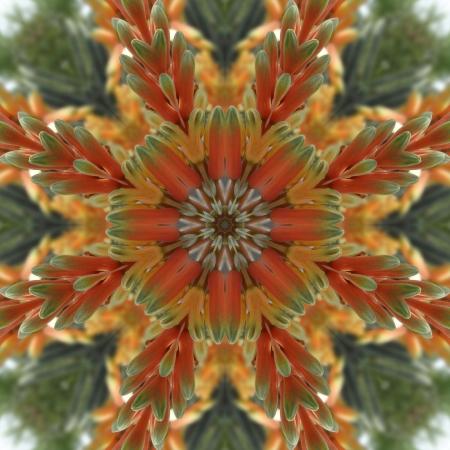 kaleidoscope: Bright Floral Mandala
