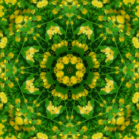 Spring Mandala Flower                                photo