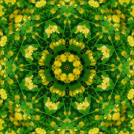 Spring Mandala Flower                                photo