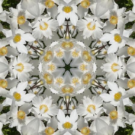 kaleidoscopic: White Floral Mandala Stock Photo