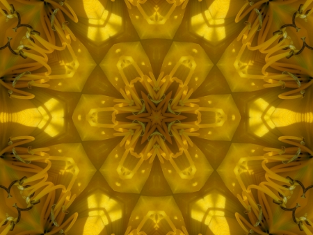 Yellow Mandala Flower photo