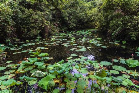 redstone: pond at Danxia Stock Photo