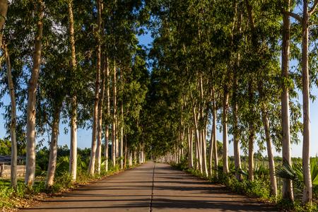 guangdong: Guangdong Kaiping park