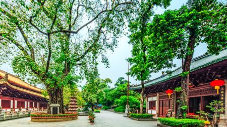 tilo: Guangzhou Guangxiao Linden