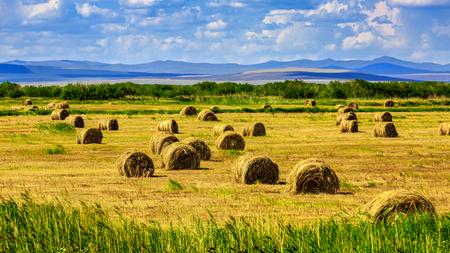 Grass haystack