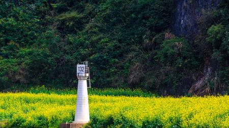 Chinas Lianchuan Luchuan Three Gorges rapeseed field 版權商用圖片
