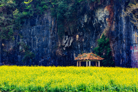 Chinas Lianchuan Luchuan Three Gorges rapeseed field 新聞圖片