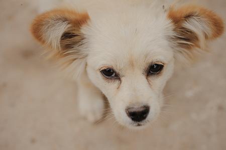 pet photography: Pet photography