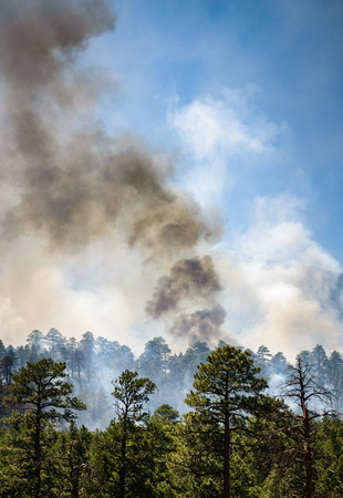 coconino national forest: Forest Fire in Coconino National Forest