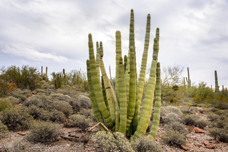 national monument: Organ Pipe Cactus National Monument