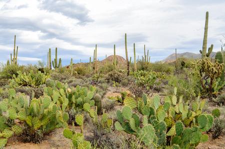 national park: Saguaro National Park