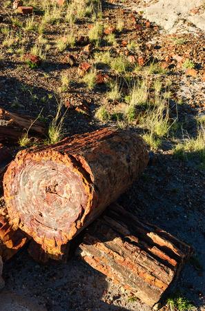 petrified: Petrified Forest National Park