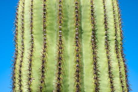 desert ecosystem: Saguaro National Park