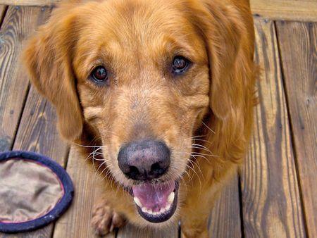 Happy Dog Stock fotó
