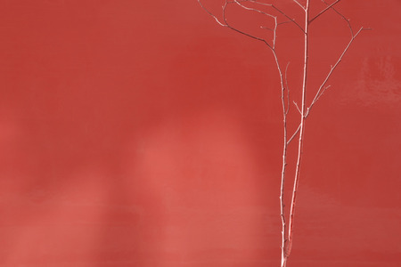 Tiny single tree on backgound in color of living coral