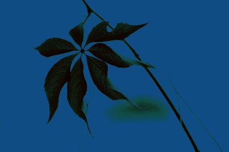 Beautiful leaf. Classic blue - trend color of 2020 Stok Fotoğraf