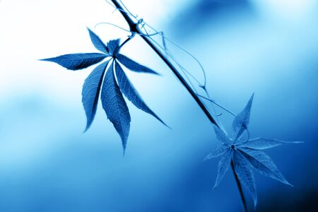 Beautiful leaves in bokeh. Classic blue - trend color of 2020