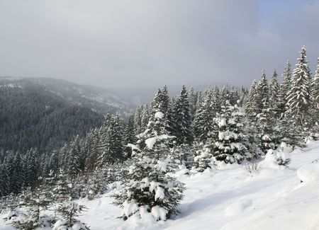the background with winter trees photo