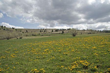 spring landscape # 1 Stock Photo - 4749341