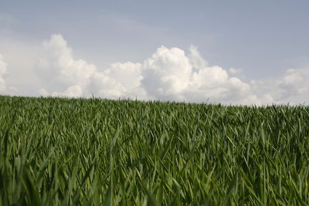 green field in the summer Stock Photo - 4902104