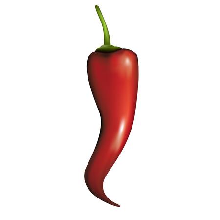 stilllife: hot spicy paprika - isolated vector illustration Illustration