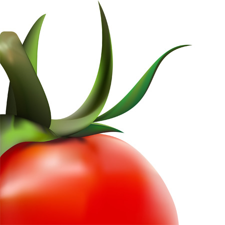 tomato close-up in vector