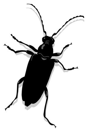 cerambycidae: Cerambyx scopolii or Capricorn beet