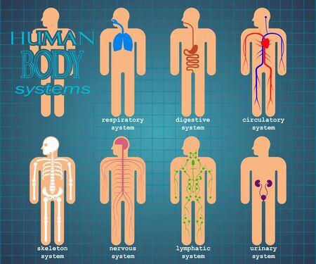 Human body systems pictogram set Vector Illustratie
