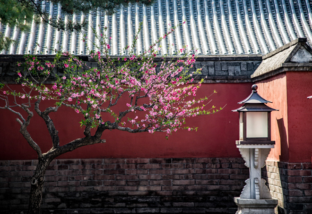 An ancient courtyard with a plum blossom