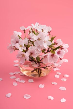 Cherry blossoms in a glass