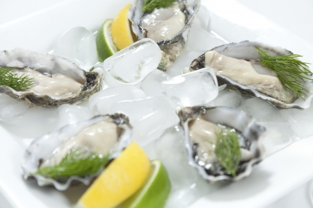 Fresh river oysters on ice with dill and lemon photo